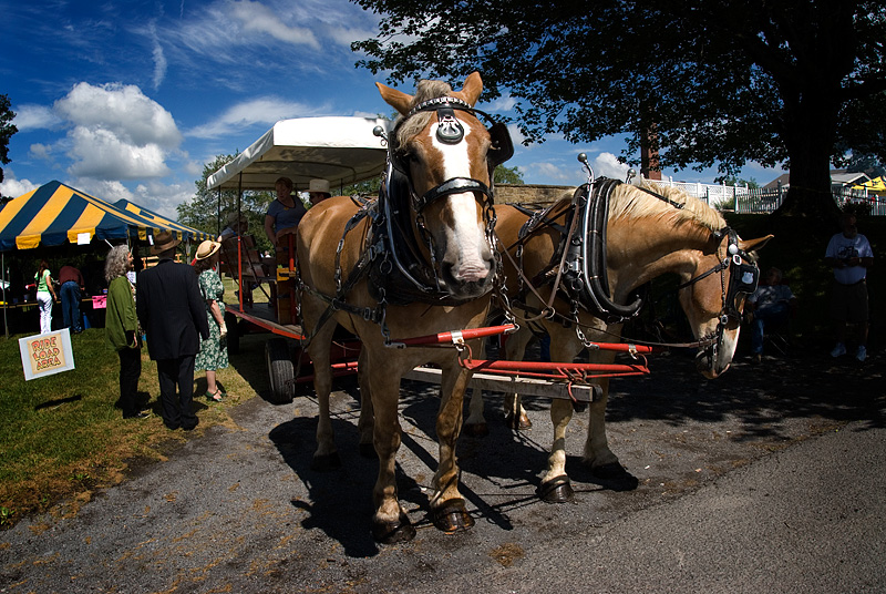 Horse-drawn wagon tours