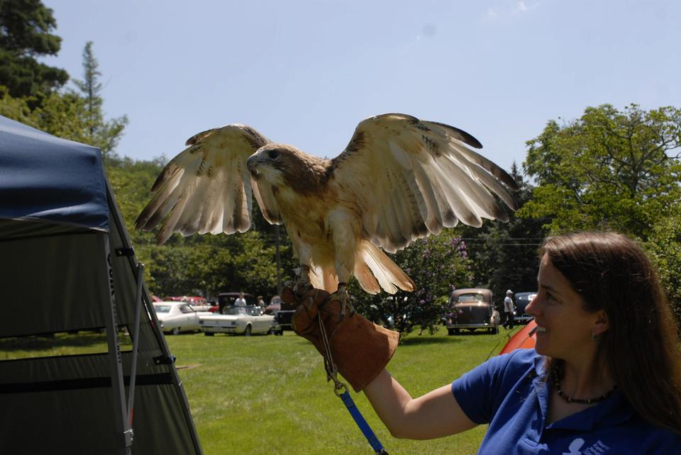 A representative from the Raptor Rehabilitation Center and a hawk